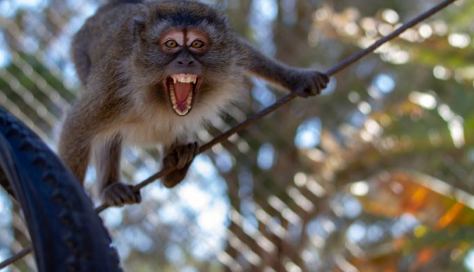 Have You Witnessed a Monkey Lurking in These Texas Woods?