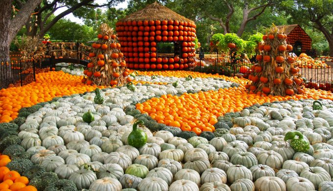 Pumpkins Take Over Dallas Arboretum Fall Festival