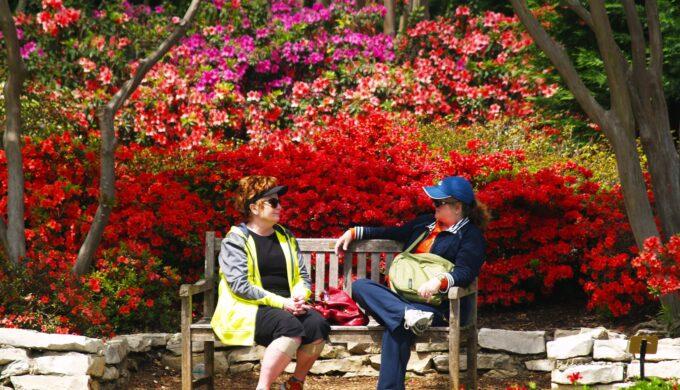 Dallas Blooms Celebrates America at Dallas Arboretum