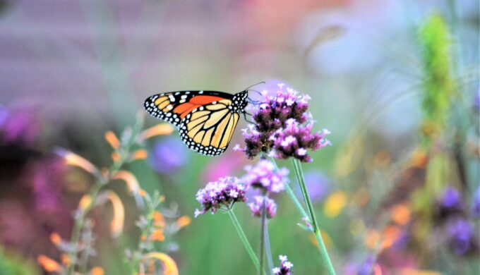 Texas Discovery Gardens: Home to a Huge Butterfly House